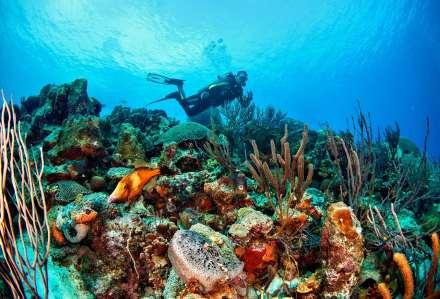 Fotoexplorer-Marcio-Cabral-HOL-Bonaire-006
