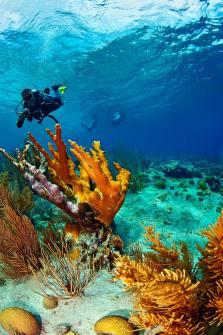 Fotoexplorer-Marcio-Cabral-HOL-Bonaire-013