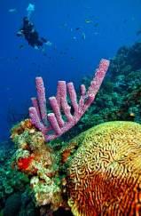 Fotoexplorer-Marcio-Cabral-HOL-Bonaire-020