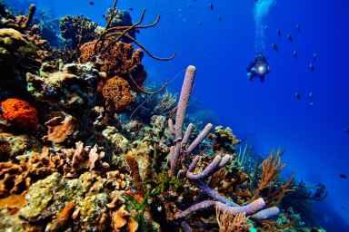 Fotoexplorer-Marcio-Cabral-HOL-Bonaire-021