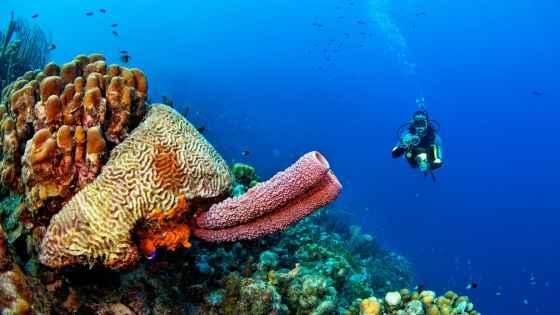 Fotoexplorer-Marcio-Cabral-HOL-Bonaire-capa