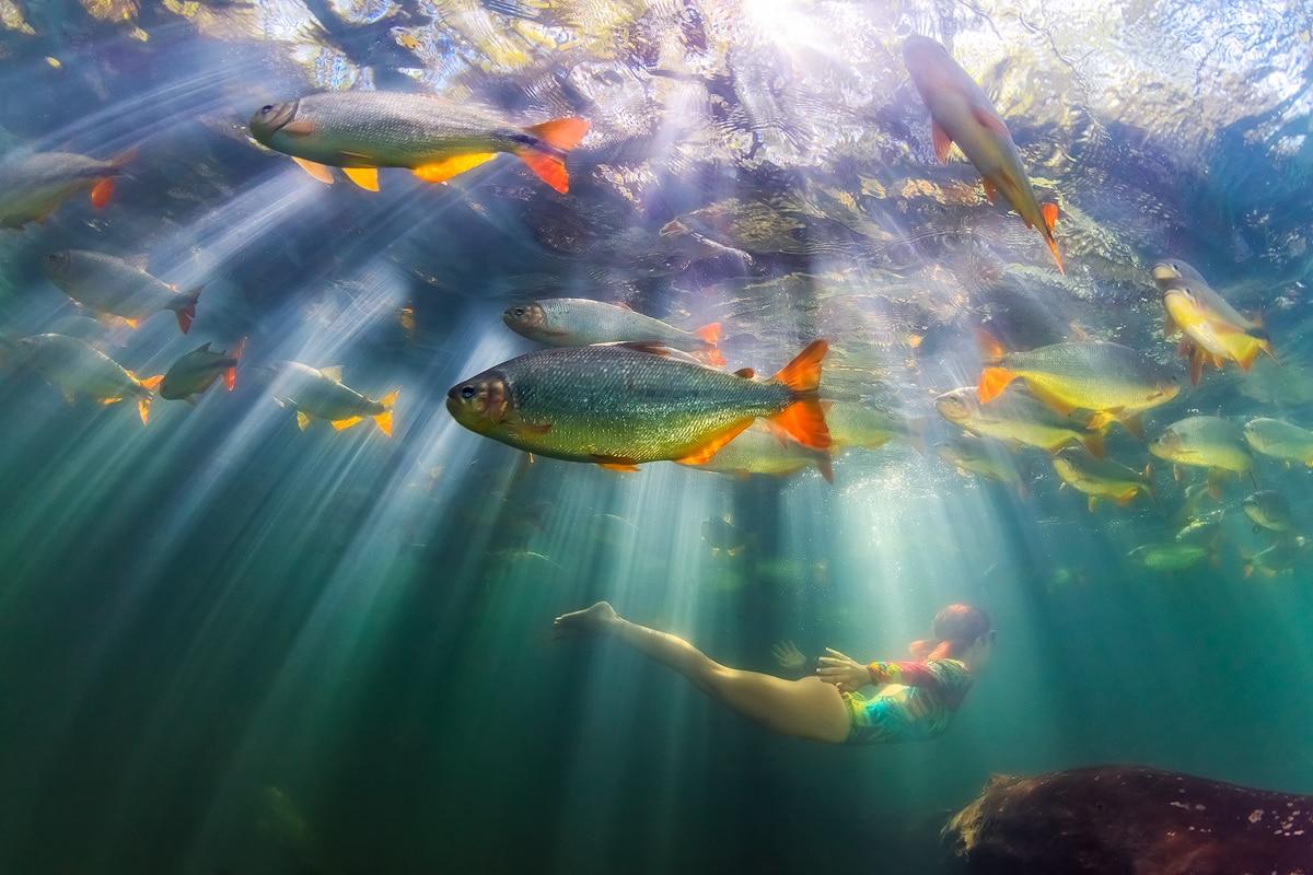 Fotoexplorer-Marcio-Cabral-Workshop-Bonito-Pantanal-Dez2018-002