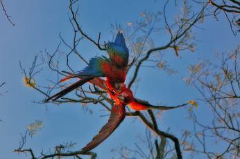 fotoexplorer_marcio_cabral_pantanal_02