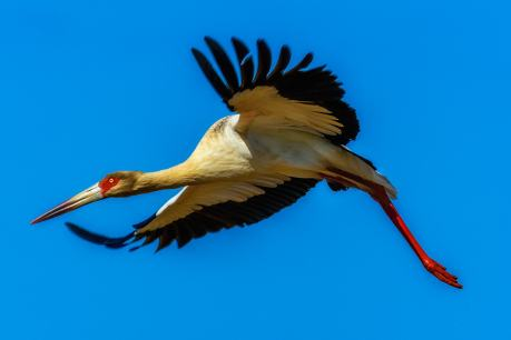 fotoexplorer_marcio_cabral_pantanal_17