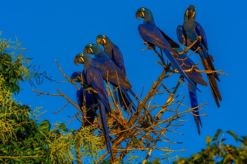 fotoexplorer_marcio_cabral_pantanal_18