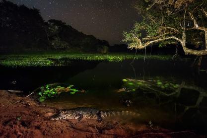 fotoexplorer_marcio_cabral_pantanal_26