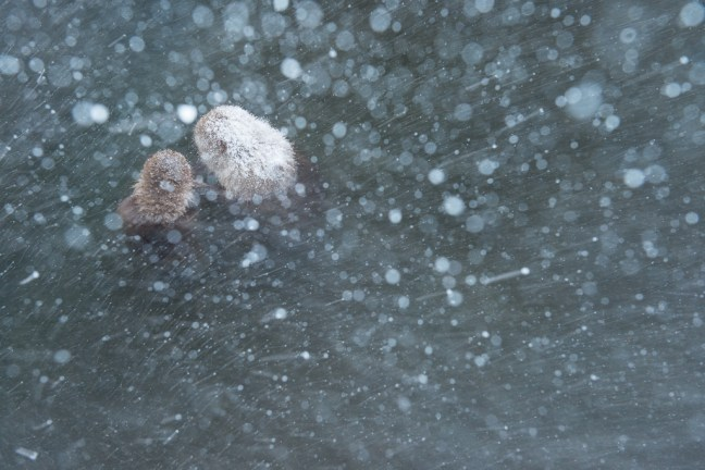 sneeuwmakaken in een bui