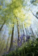 lente in het Hallerbos