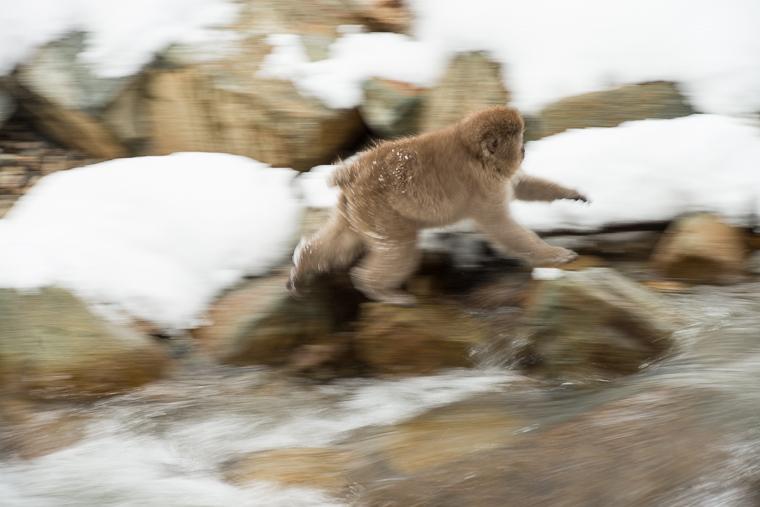 lange sluitertijden bij volgen van rennende makaak