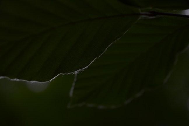 Bladeren in low-key