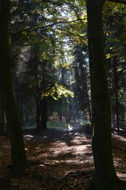 Zon en mist in het beukenbos bij Surae.