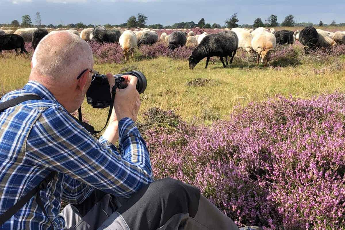 Deelnemer fotografeert schapenkudde tijdens fotoweekend Drenthe