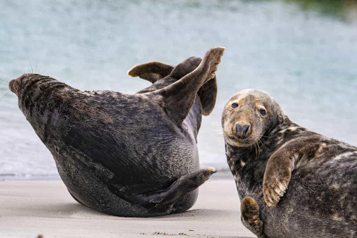 Fotoreis Helgoland Jan van Gent en zeehonden