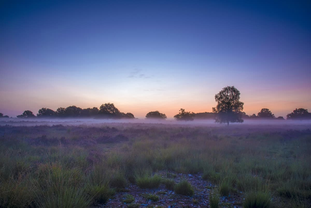 Nevel boven de Brabantse heide Fotoweekend Brabant