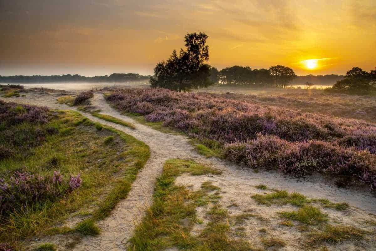 Fotoweekend Drenthe Gasterse Duinen de topper