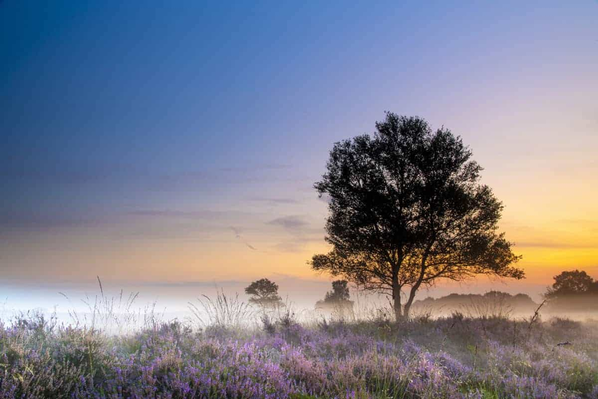 Fotoweekend Drenthe Gasterse Duinen solitair boompje