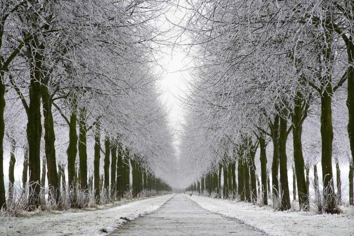 Een lange witte bomenrij langs een laan tijdens een workshop fotografie in de winter.
