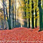 zonnestralen-Rozendaal | Fotografie Arthur van Leeuwen