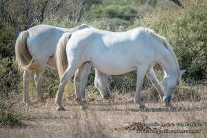 camargue, paarden | Fotografie Arthur van Leeuwen