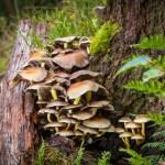 paddenstoelen op boomstronk