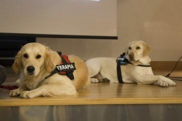 """""""Los perros de terapia como facilitadores terapéuticos"""""""