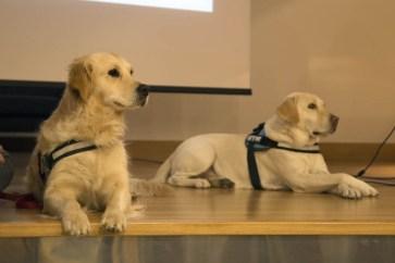 Perros utilizados en entornos oncológicos
