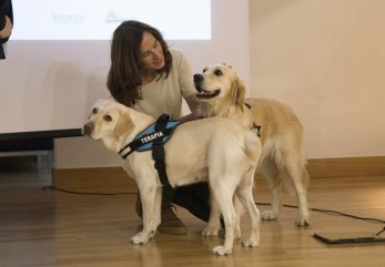 Perros de terapia como facilitadores terapéuticos