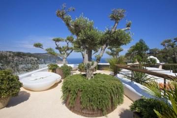 Árboles en Hotel 5 estrellas Ibiza