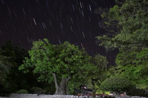 """Pohyb hvězd nad posvátným """"strážním"""" stromem v klášteře..."""