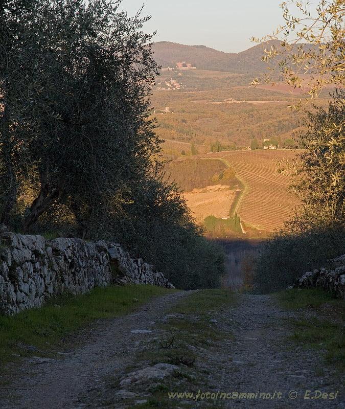 Chianti Pianella Monti