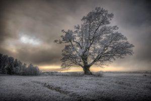 Majestetisk eiketre på et jorde i Ås, Viken. Etter mange dager med sprengkulde er treet og jordet i forkant blitt dekket av rim og frost som gir en ekstra dimensjon mot den nydelige himmelen i skumring.