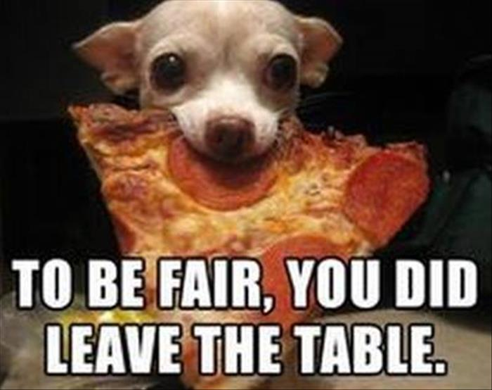 Funny Animal Pictures Rich Image And Wallpaper