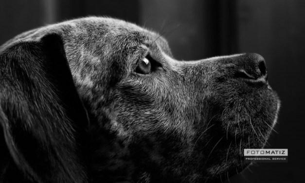 The guard dog