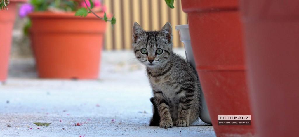 Little scary kitten