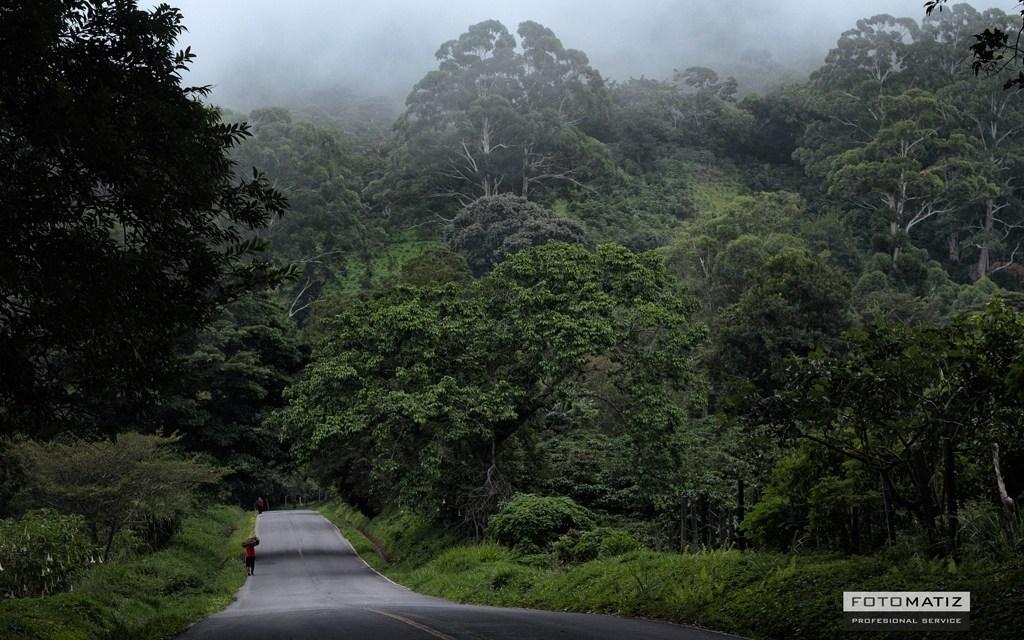 Boquete, tropical forest area