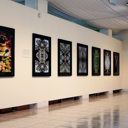 Expositions & Fine Art