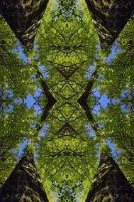 Expo Naturaleza Inventado - Invented Nature [F2]