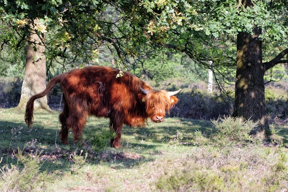 Vaca prehistórica