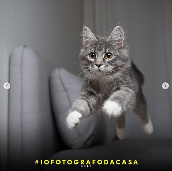 #iofotografodacasa Challenge Nikon