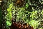 tropicka-vegetacia