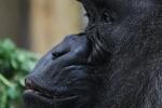 zoo-lesna-092