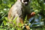 zoo-lesna-564