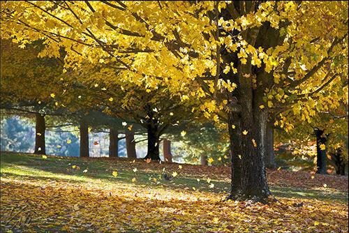 Sonbahar Yaprakları Fotoğrafları