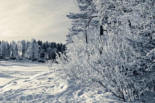 kar fotoğrafları