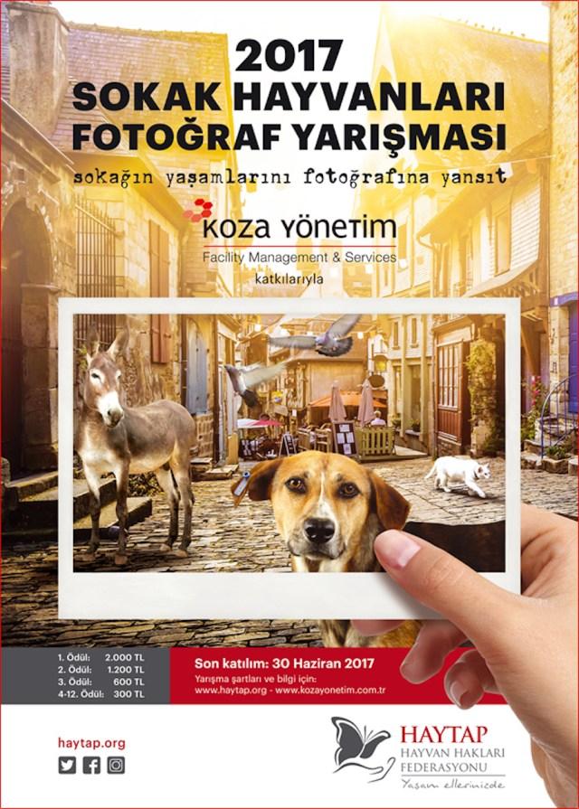 2017 Sokak Hayvanları Fotoğraf Yarışması