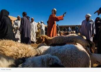 travel-viaje-siqui-fotografia-marruecos-mercado-ganado
