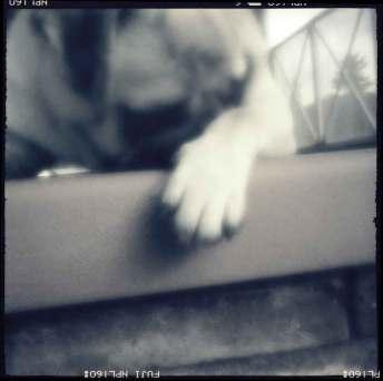 pinhole-foto-siqui-estenopeica-perro