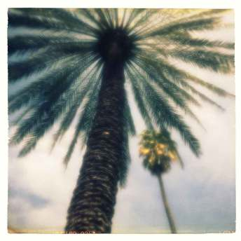 pinhole-foto-siqui-estenopeica-palmera