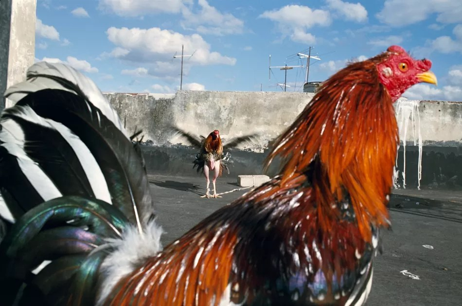 RNW.02.Havana.Cuba . 2008 - Alex Webb and Rebecca Norris Webb on Street Photography and the Poetic Image [Recensione] - fotostreet.it