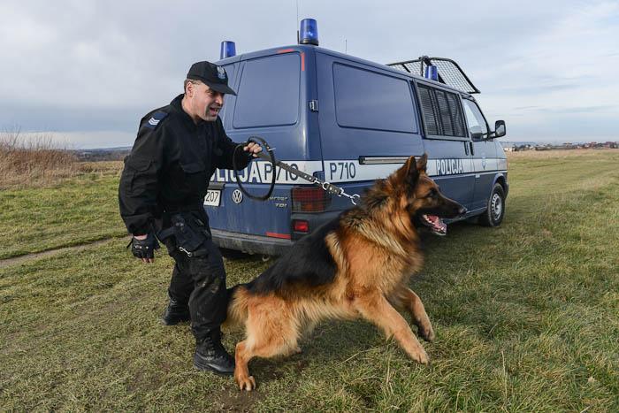 Przewodnik psa policyjnego na tle radiowozu